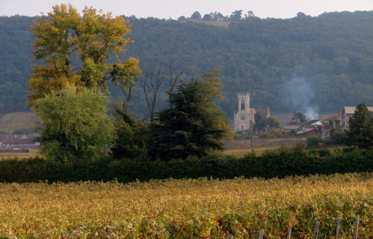 ... en traversant les vignobles du Pouilly Fuissé.