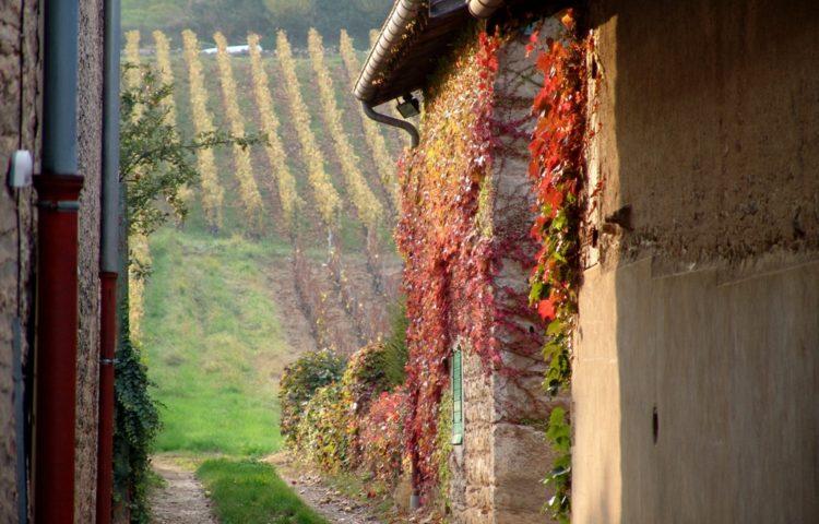 1.9 Le sentier vers les vignes